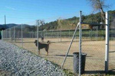 guia33-barcelona-animales-mascotas-peluqueria-canina-help-guau-adopcion-y-protectora-de-animales-26312.jpg