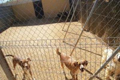 guia33-barcelona-animales-mascotas-peluqueria-canina-help-guau-adopcion-y-protectora-de-animales-26313.jpg
